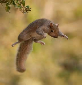 squirrel jumping